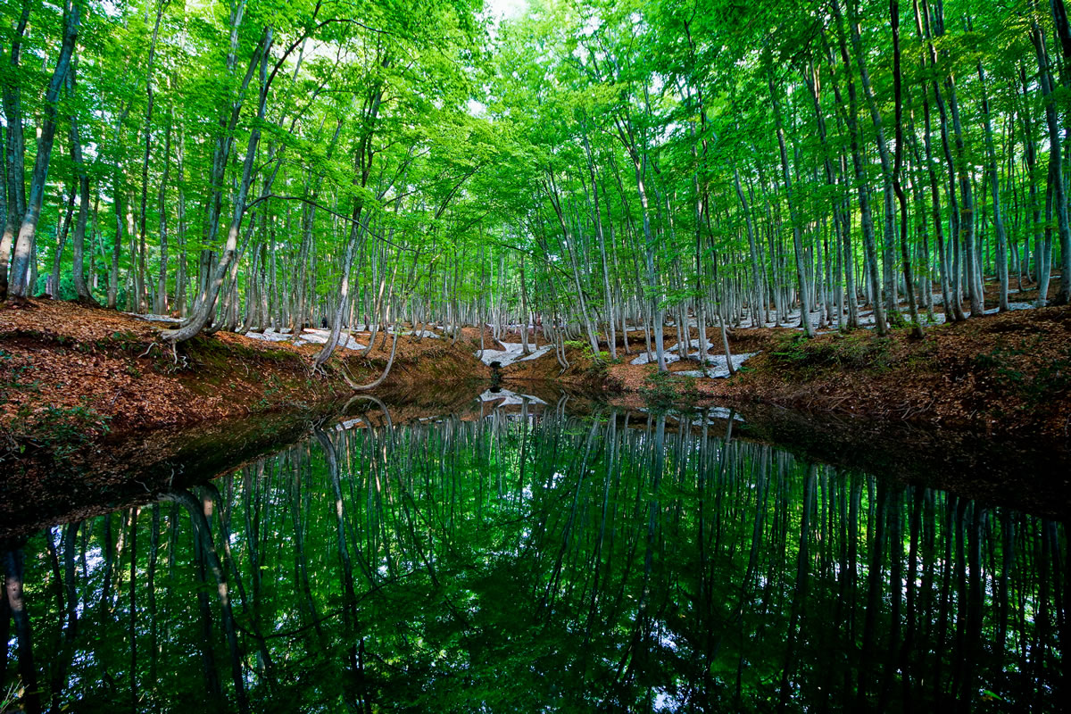 Bijin bayashi Forest