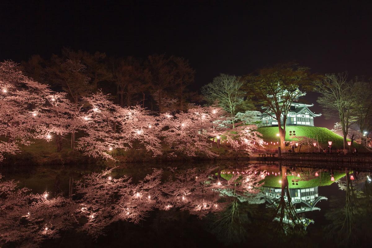 Night cherry blossoms in Takada park