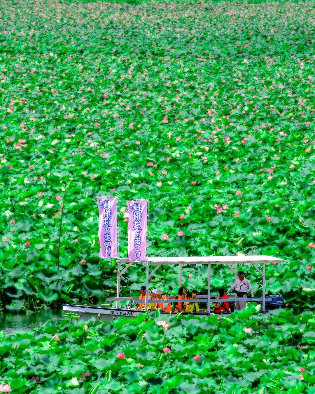 登米市長沼蓮花祭