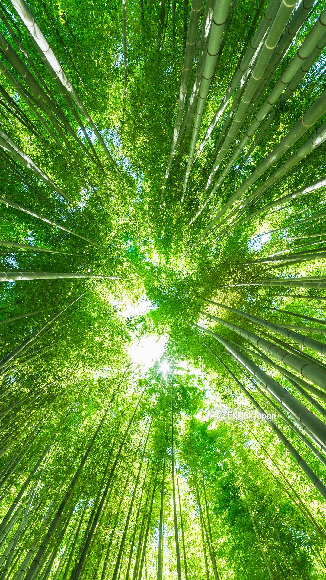 絶景壁紙 ざわざわと風にたゆたう 竹林 の壁紙をあなたの待ち受けに Zekkei Japan