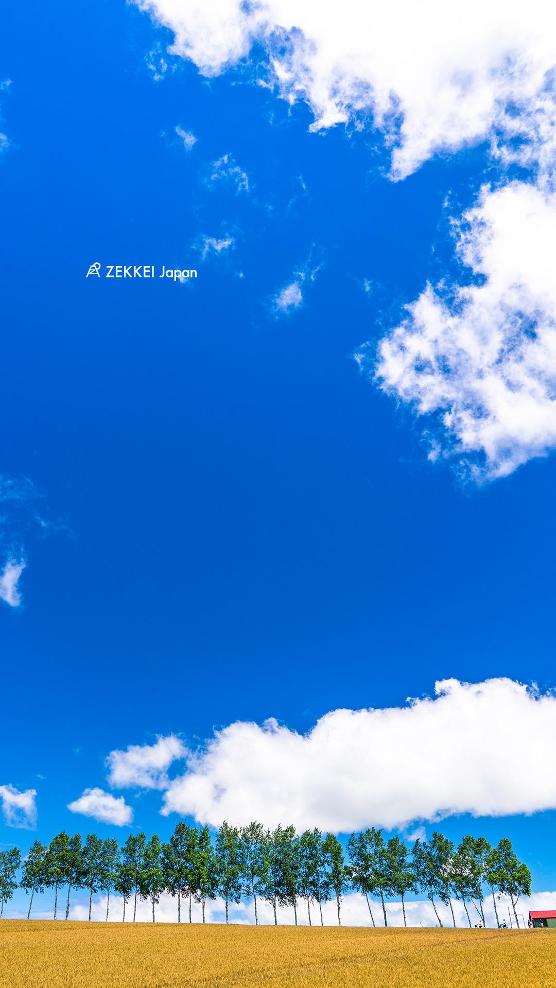 絕景桌布 北海道 美瑛山丘上 名樹群 桌布大放送 絕景日本