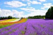 Furano · Biei · Hẻm núi Sounkyo