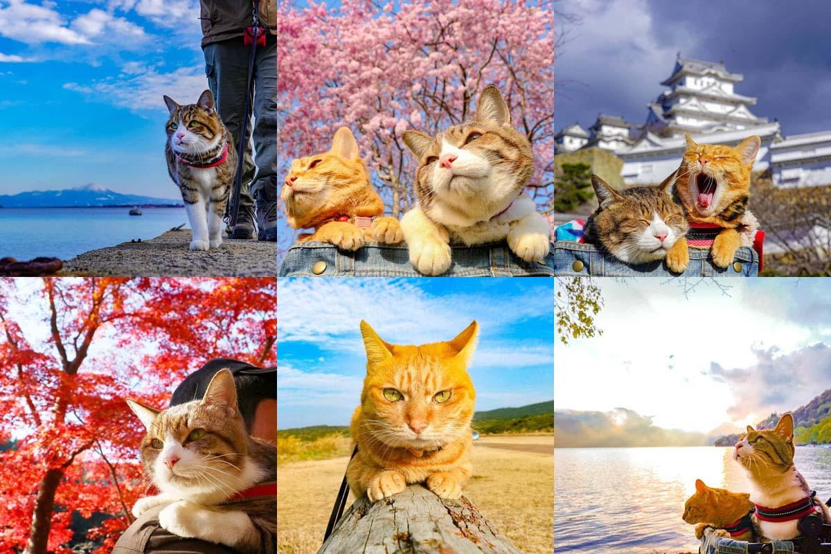 Traveling kitty cats throughout Japan, Daikichi & Fuku chan