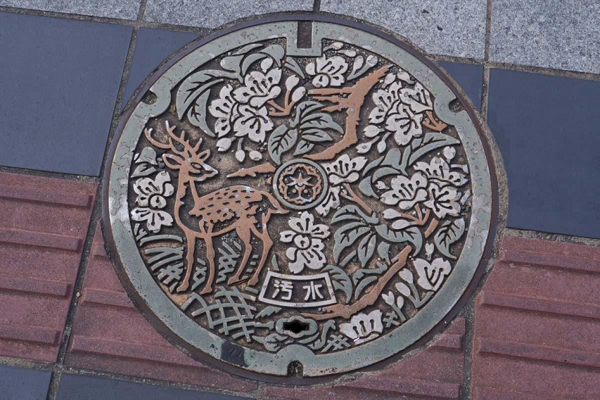 奈良県奈良市・鹿とナラノヤエザクラ