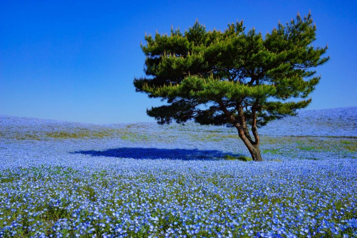 Perfect weather to go out ! Spots that have amazing views of May flowers.