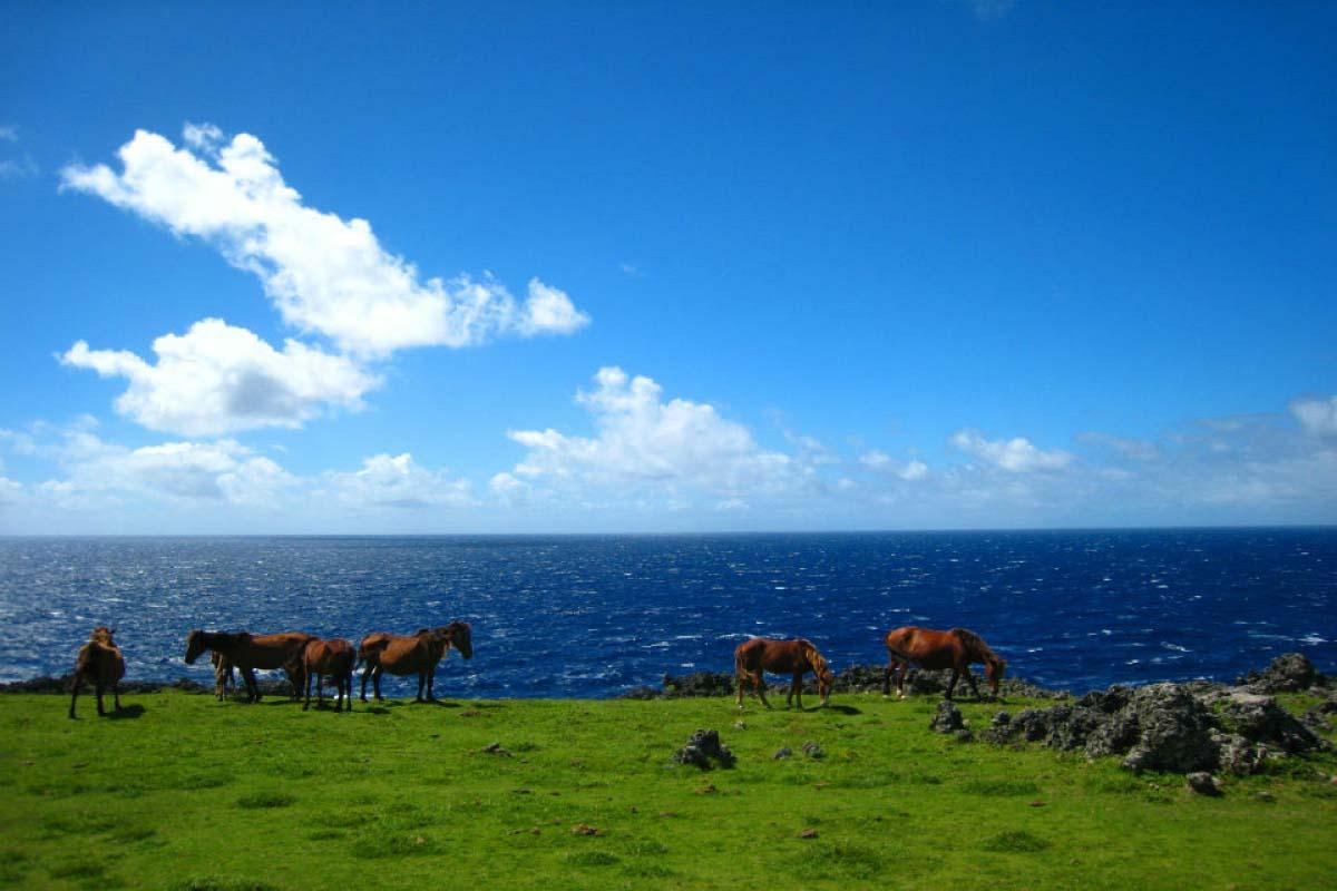 與那國馬  與那國島