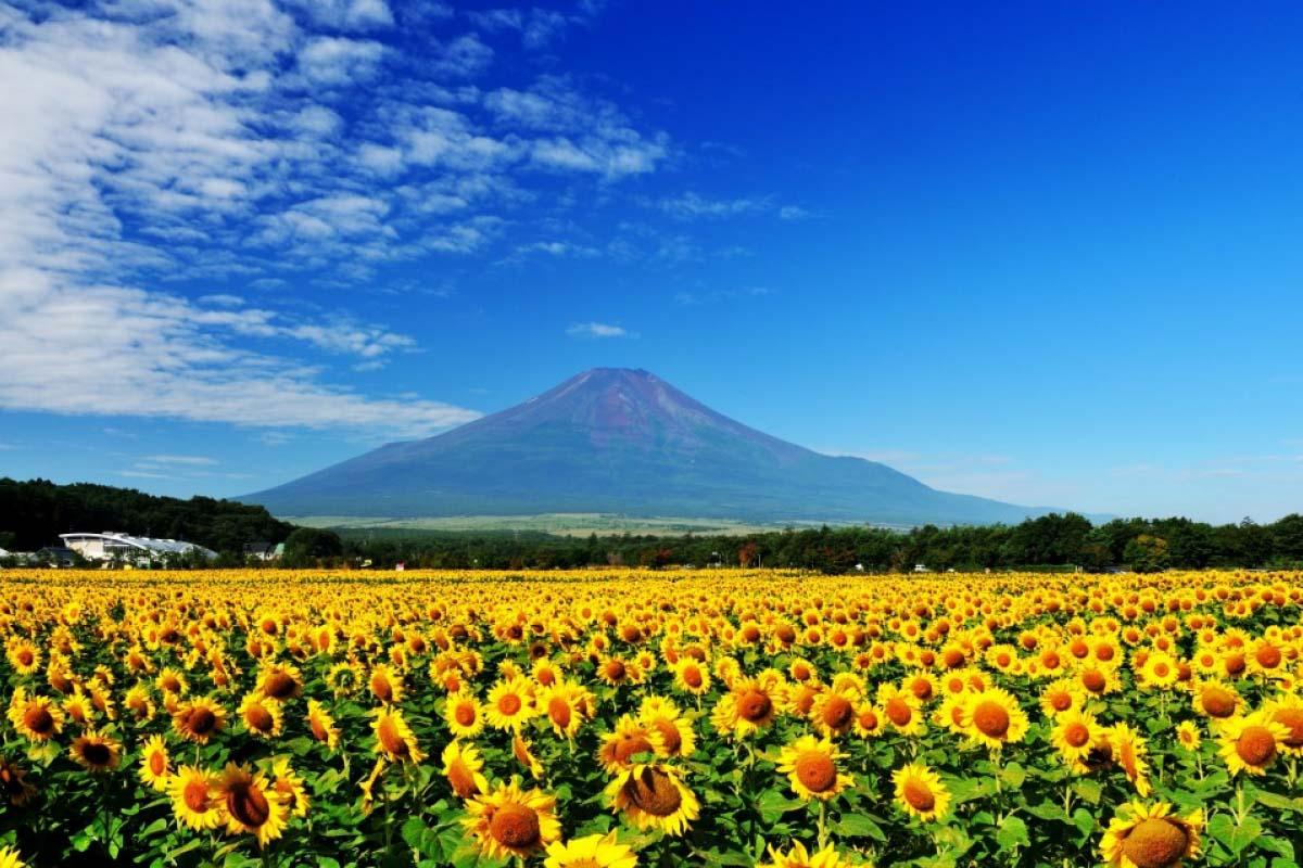 不只有富士山!擠進日本國內最想移居前3名排行,山梨縣6處絕景擄獲日本人的心
