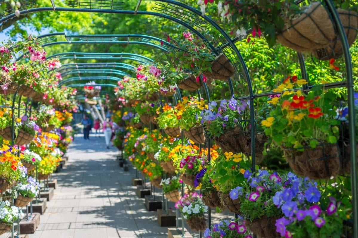 山繆克金花園
