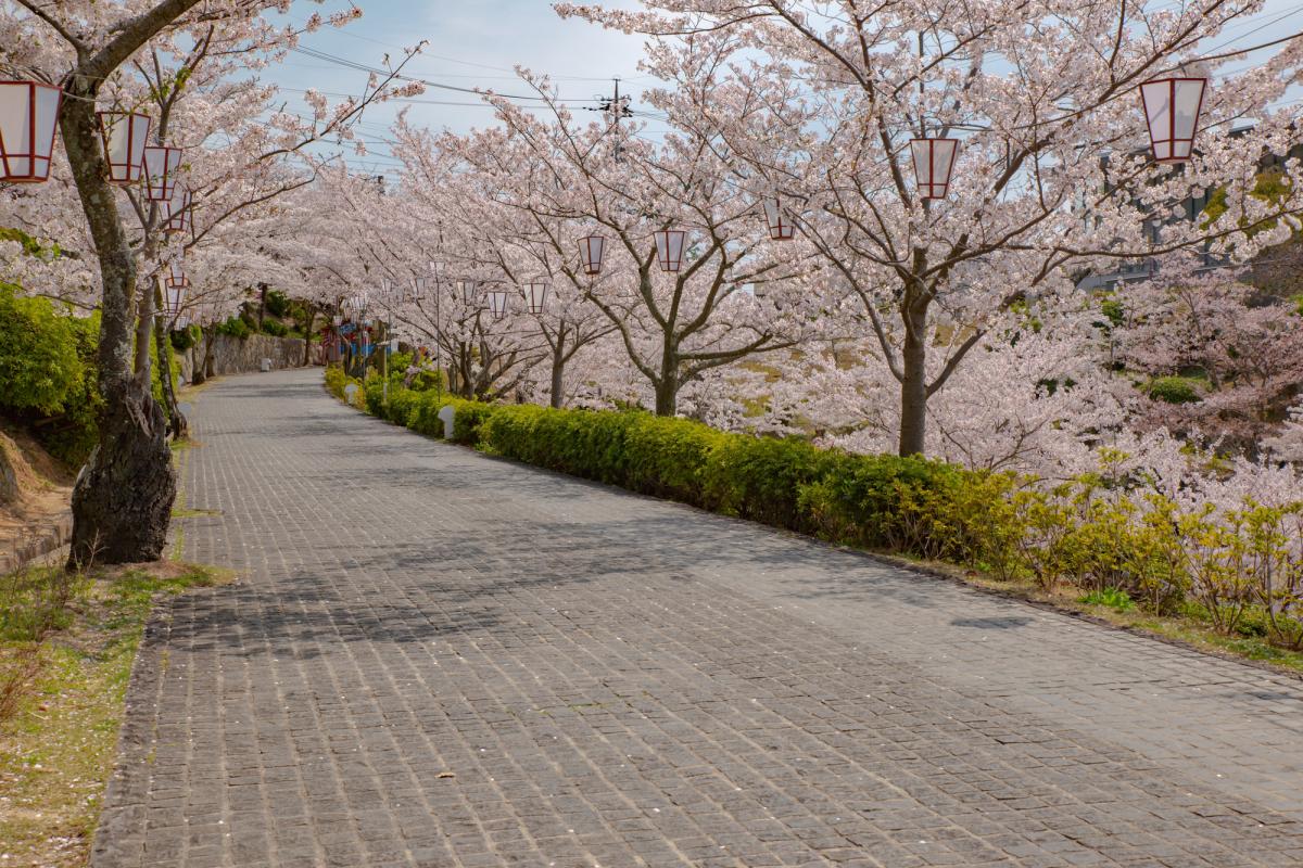 千光寺公園3