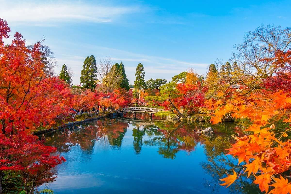 京都「永觀堂」精彩紅葉絕景! 一手掌握參拜時間&點燈資訊