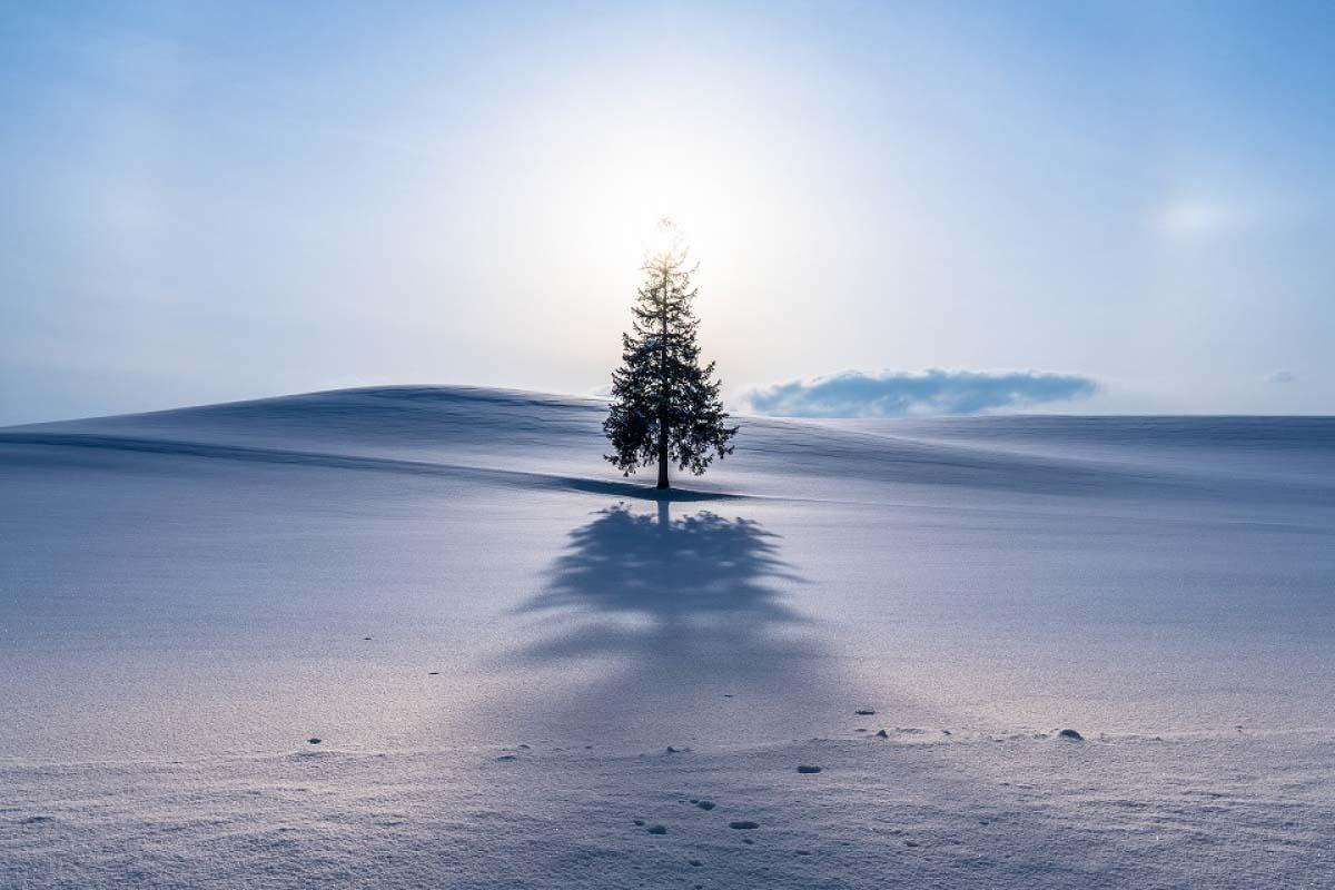 Tree of Christmas (Tree)