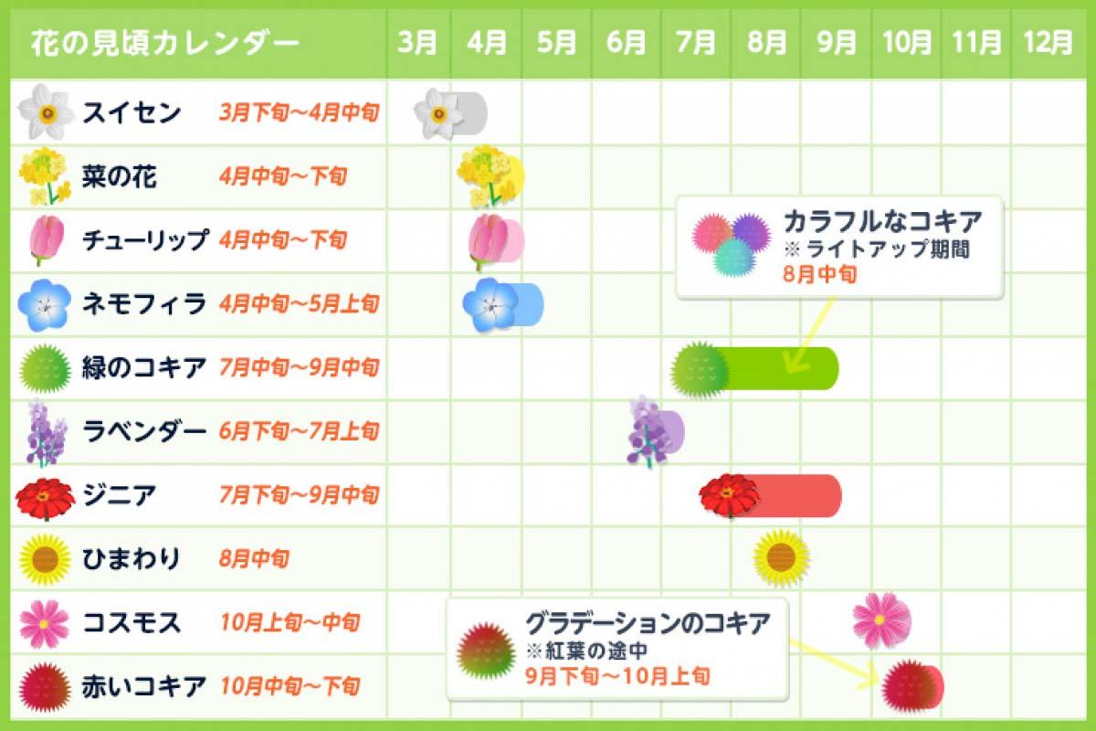 国営ひたち海浜公園の花の見頃カレンダー