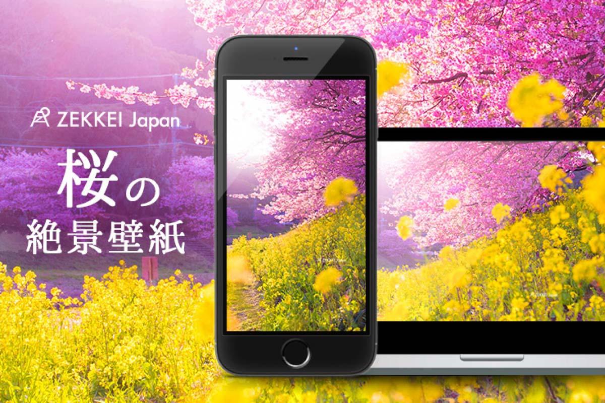 あなたのパソコン スマホに絶景を 桜のzekkei壁紙をプレゼント