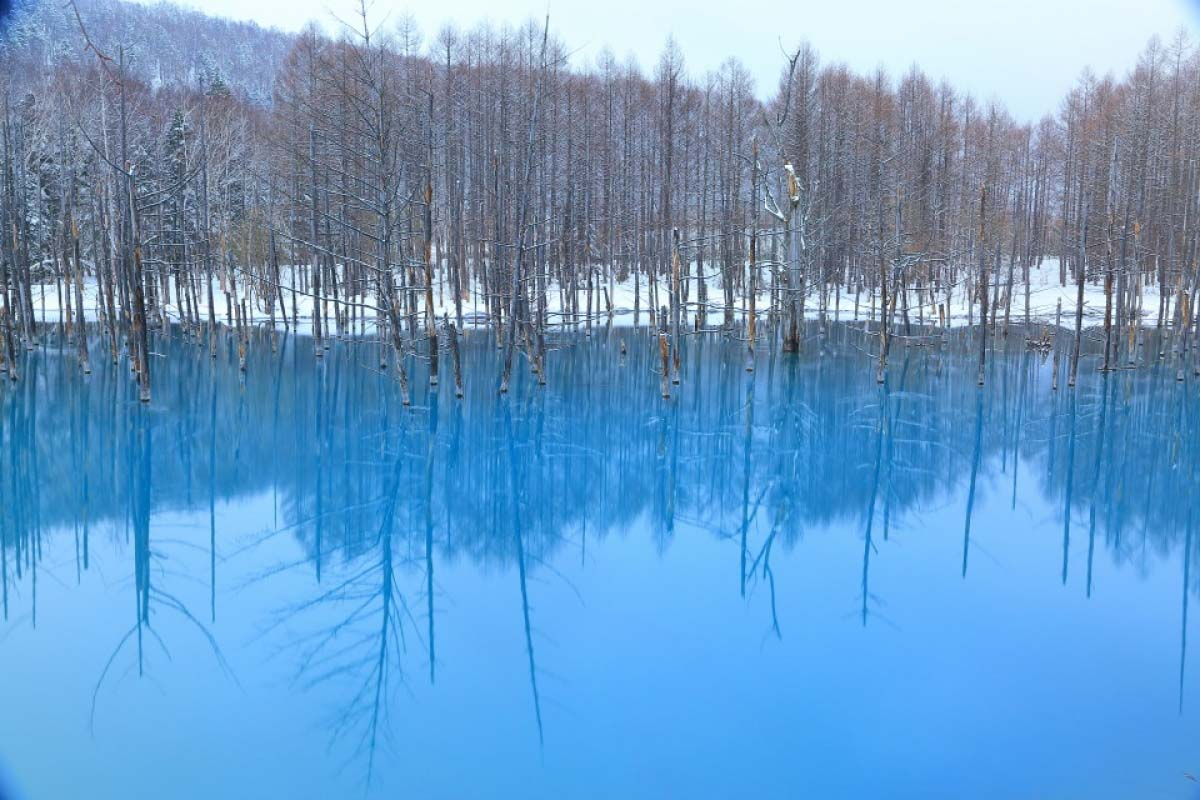 北海道 美瑛 青い池 Macの壁紙にも使われた コバルトブルーの絶景