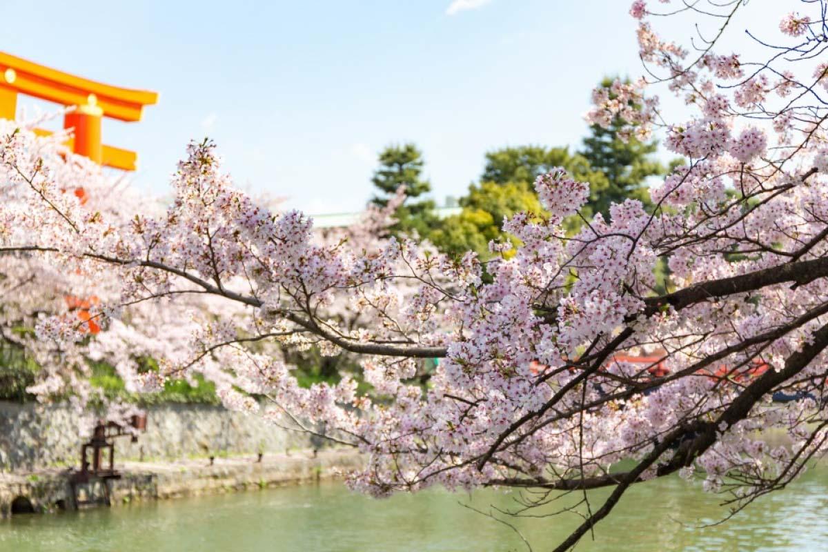 岡崎十石舟・櫻花暨新綠迴廊巡遊