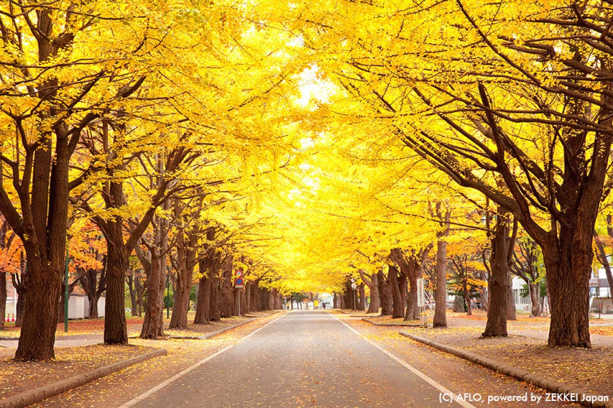 この秋おすすめ!「札幌」の紅葉名所6選