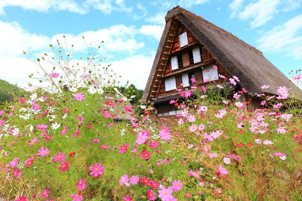 """引人入胜!装点四季的""""秋日之花""""的五大景点"""