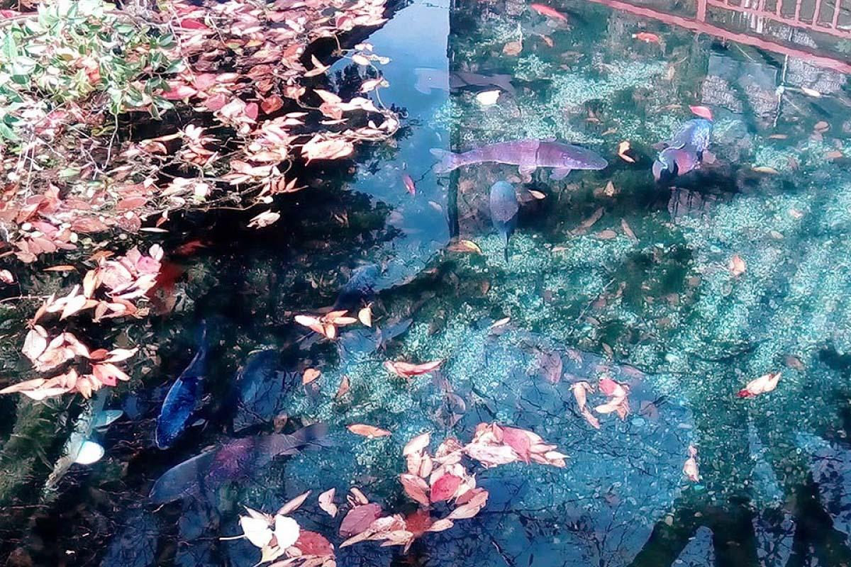 2 springs in Akiruno, Tokyo like the