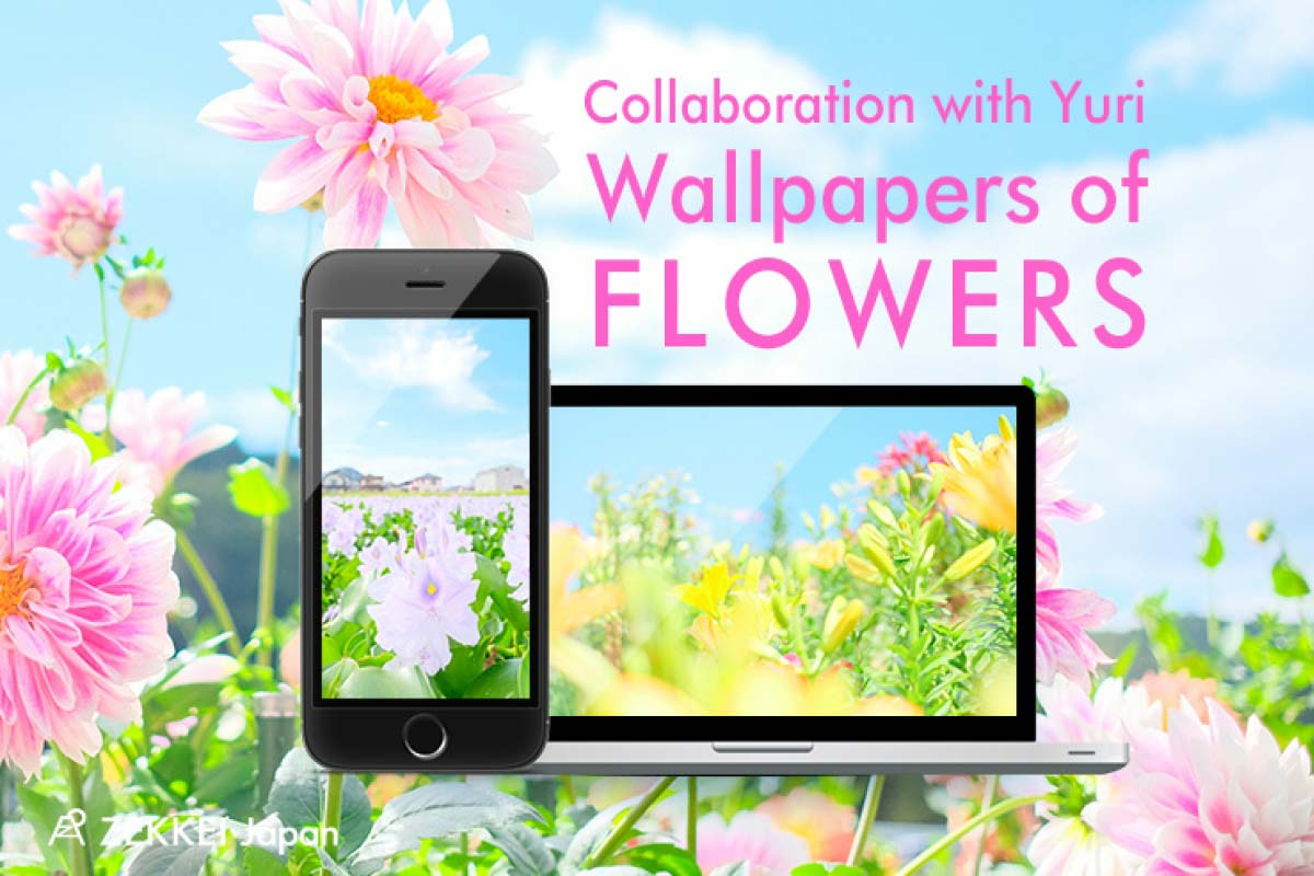 [wallpapers] wallpapers of fluffy pastel colored flowers