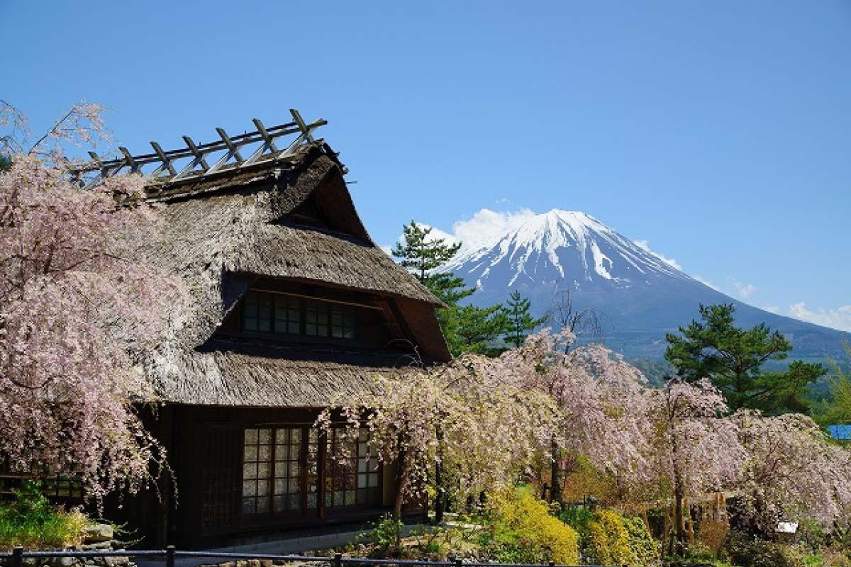 東京近郊也有合掌造建築!? 跳上河口湖周遊巴士,暢遊不一樣的景點!