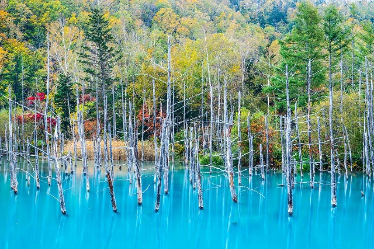 Blue pond Biei, Hokkaido, wallpaper Apple Mac |ZEKKEI Japan