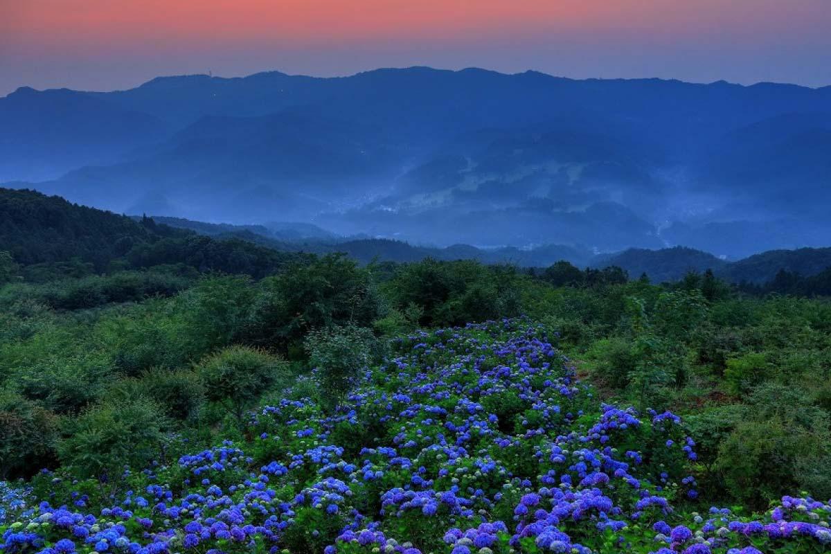美之山公園