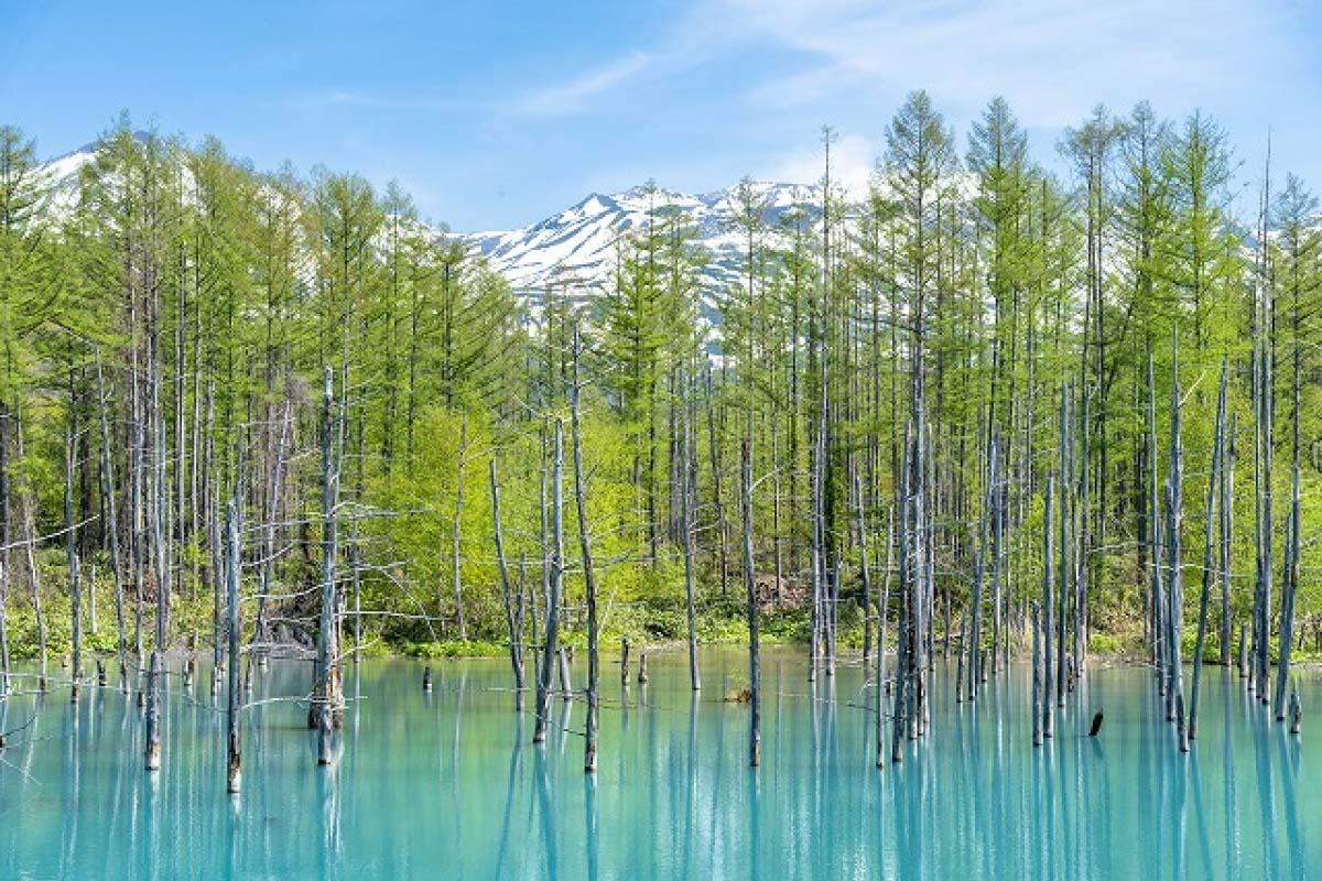 Blue pond Biei, Hokkaido, A Mac wallpaper|ZEKKEI Japan