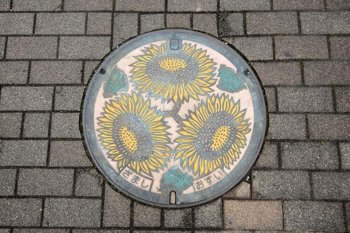 神奈川県座間市・ひまわり