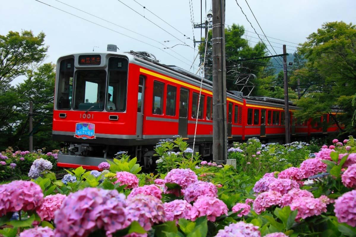 箱根登山鐵道 紫陽花 箱根 鐵道