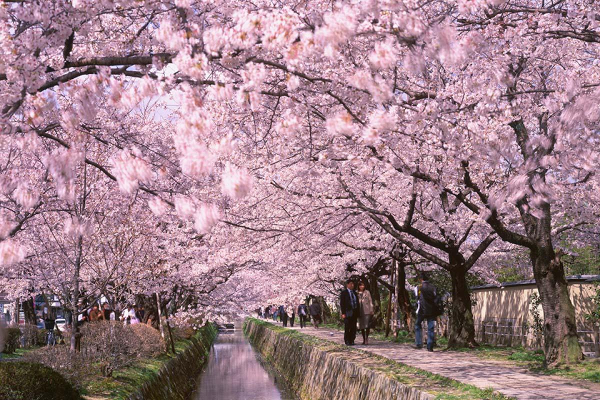 Kết quả hình ảnh cho con đường triết học kyoto