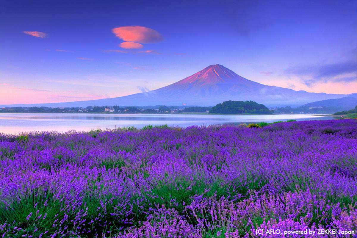 12 months of Mt. Fuji!...Let's enjoy various scenery