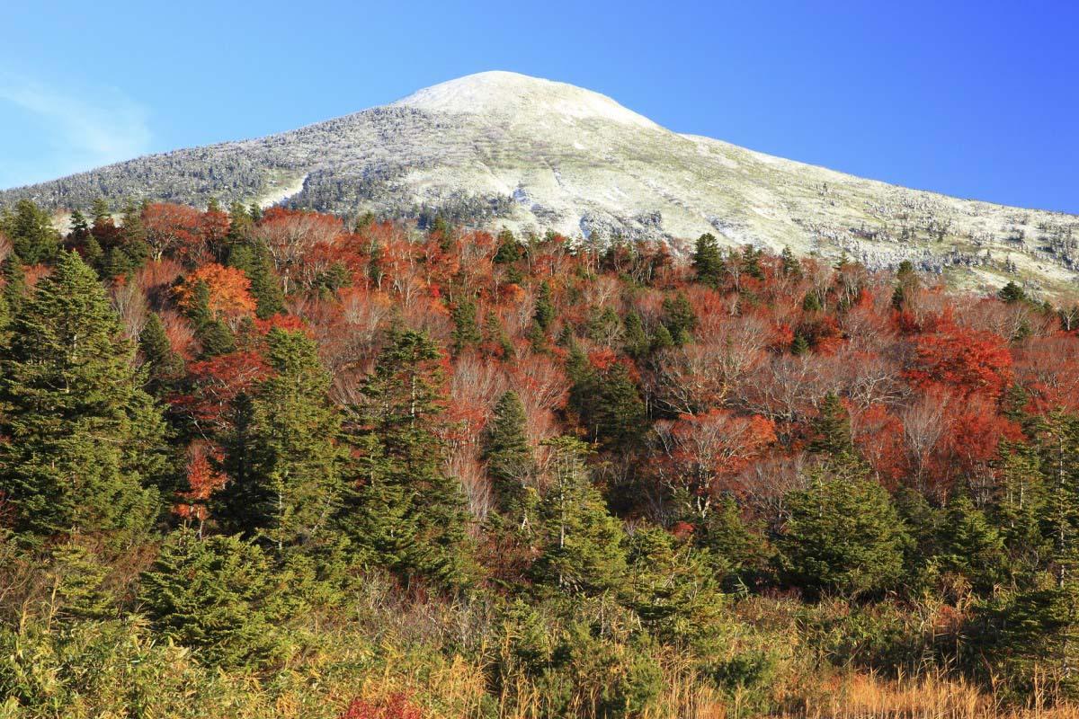 不仅是红叶美景!!同时还能欣赏到白色雪景!~奢华的美景〈韩国留学生的日本旅游记⑤〉