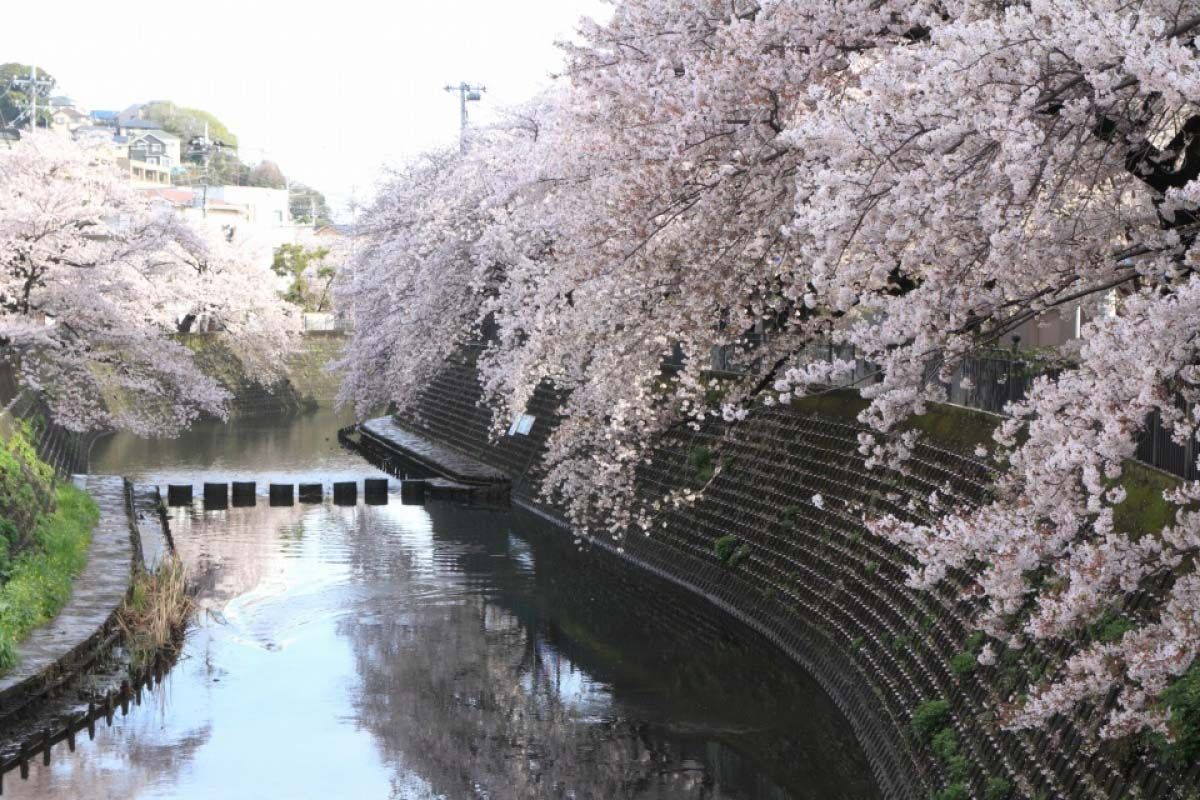 大岡川散步道