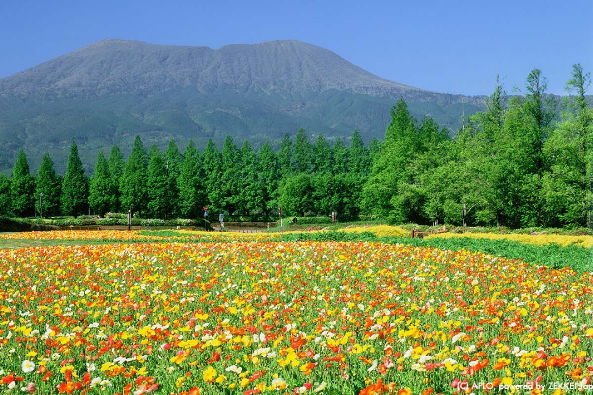 Scenery That Draws You In Zekkeis Best 5 Autumn Flowerszekkei Japan