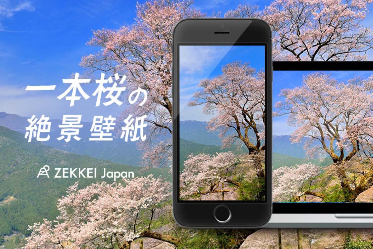 <絶景壁紙>凛と咲く一本桜の絶景をあなたの待ち受けに