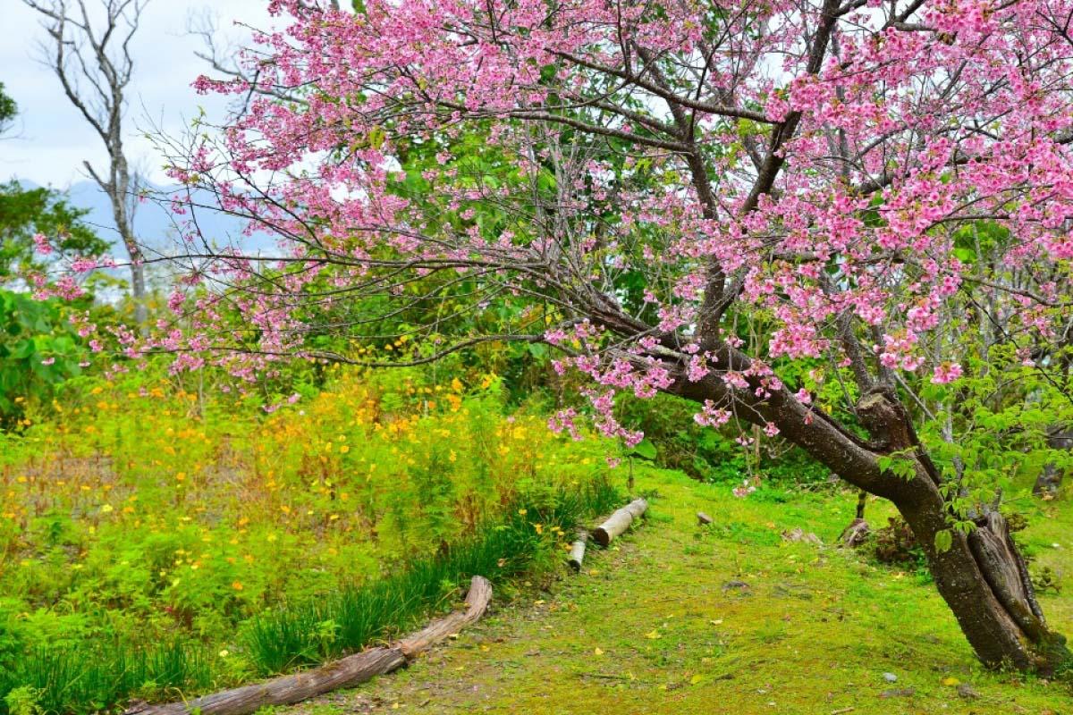 名護中央公園