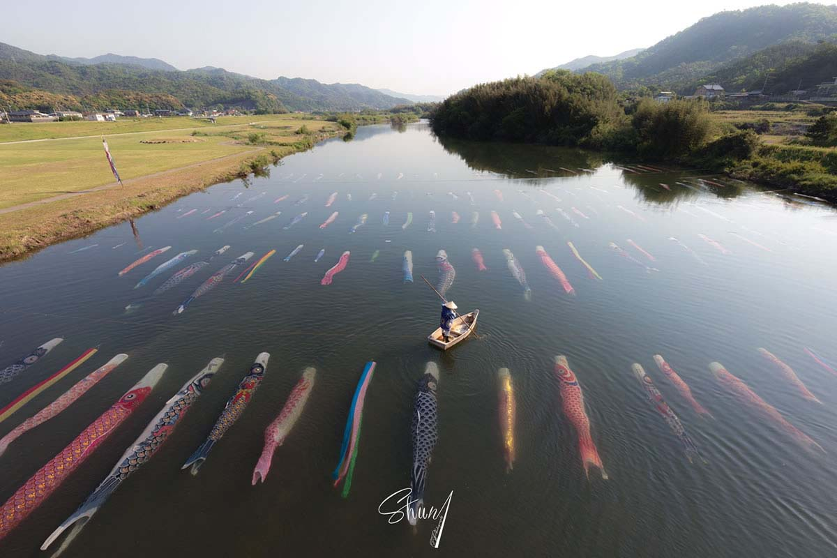 More than 100 carp streamers swimming in a river!