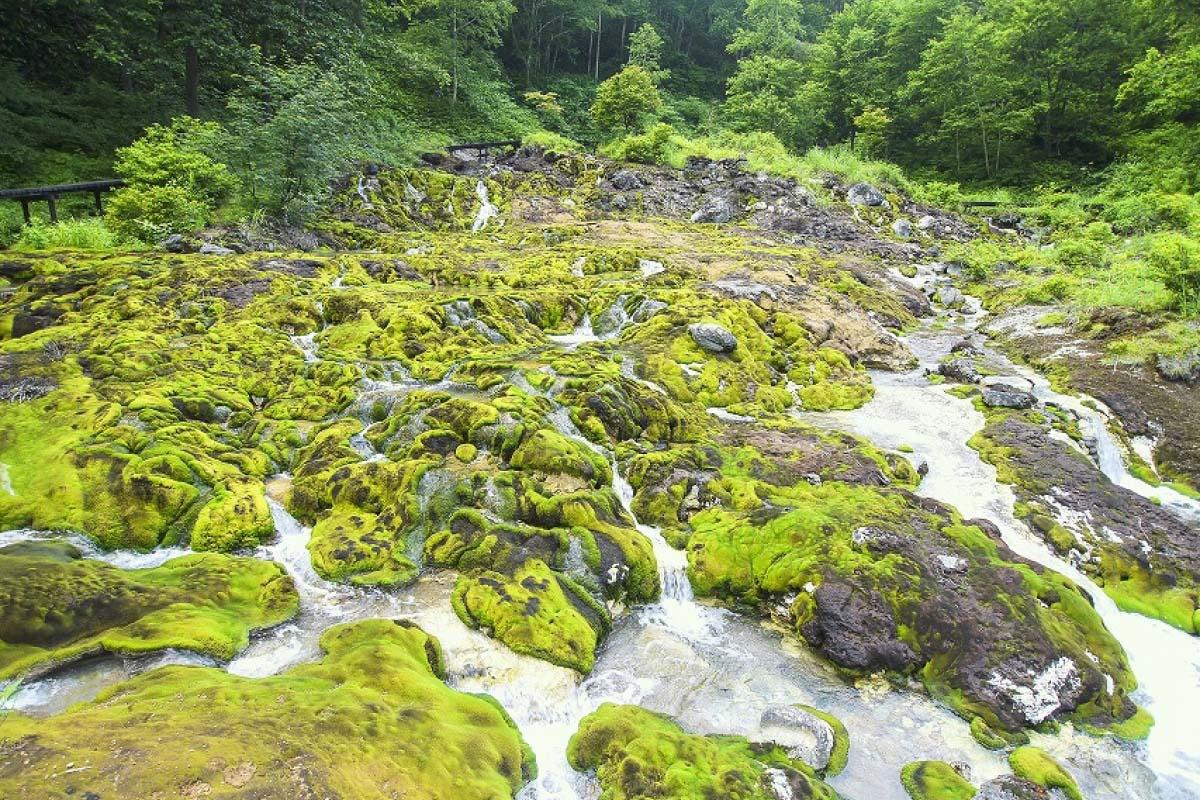 長萼葉苔公園的穴地獄