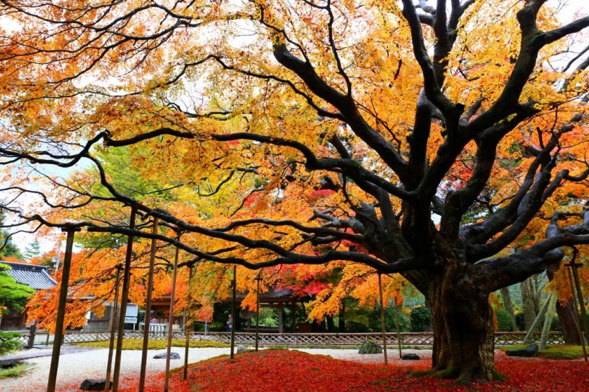 日本賞楓不只關東、關西! 盤點九州福岡6大最美楓紅景致