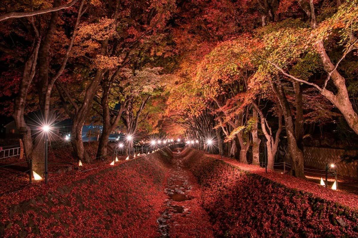 富士河口湖紅葉迴廊