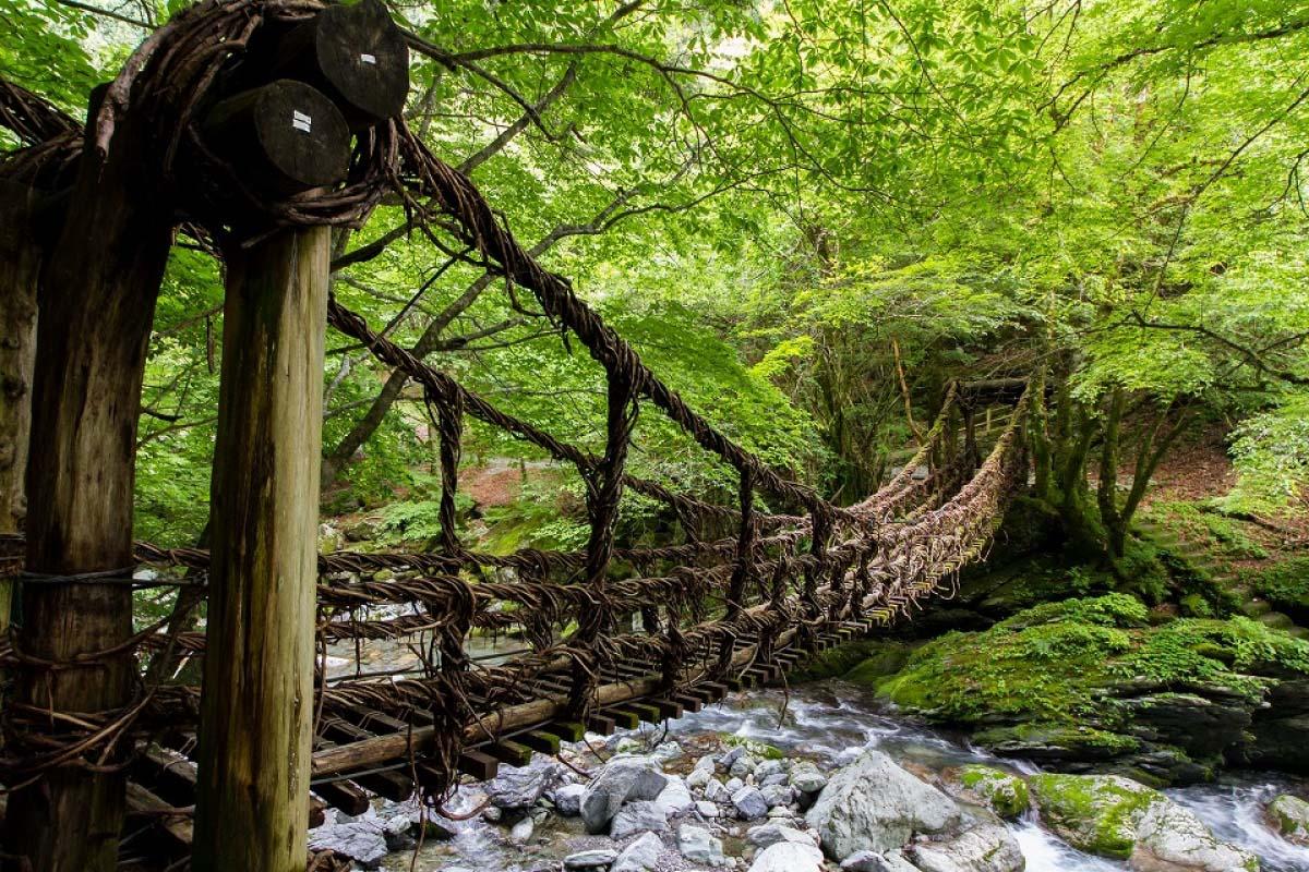 奧祖谷二重葛藤橋