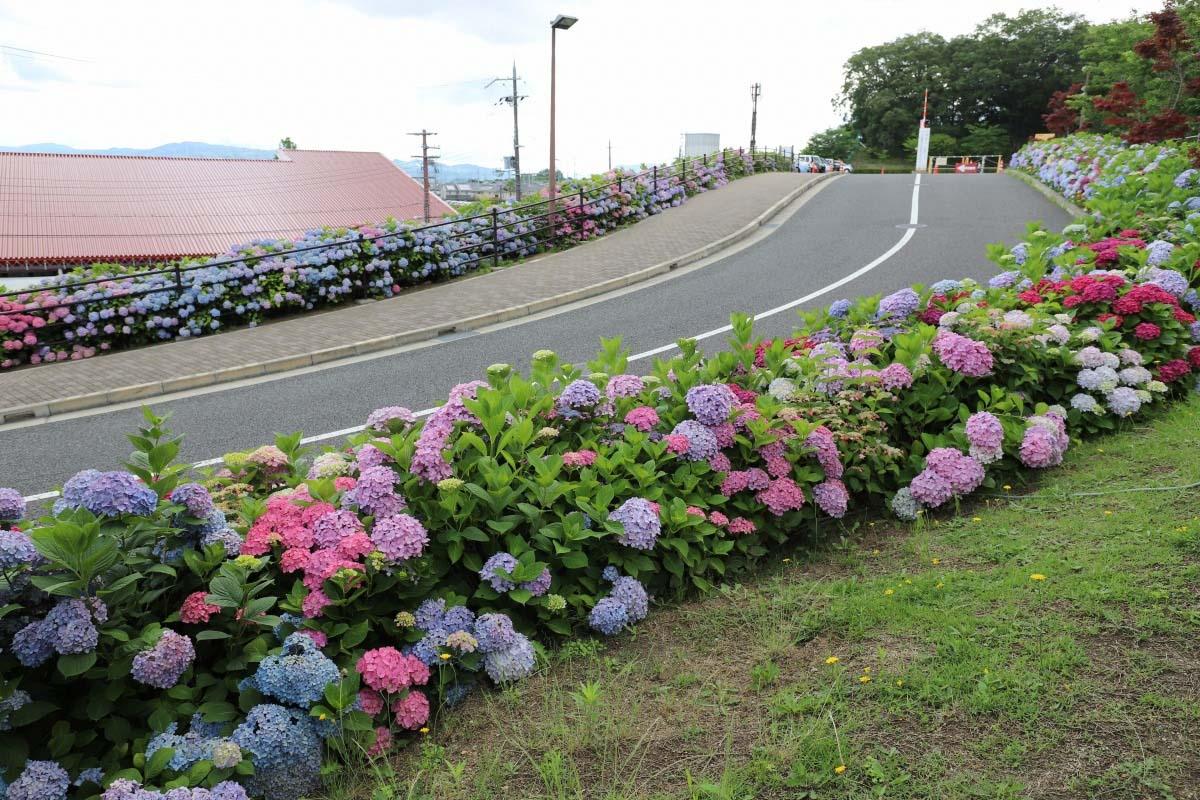 道之站 Shiratori之鄉・羽曳野