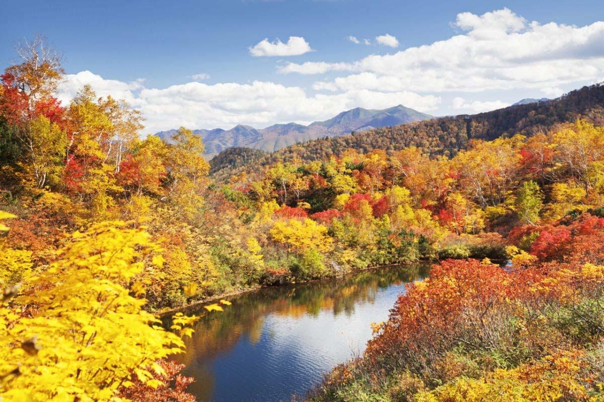 日本楓葉季到來!! 北海道楓葉最前線總整理