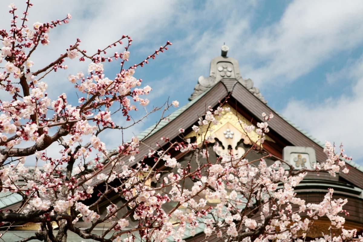 文京梅花祭