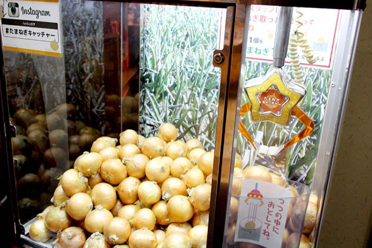 淡路島 大洋蔥
