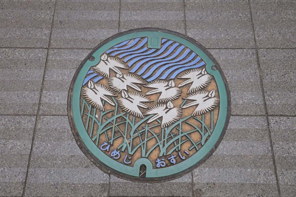 兵庫県姫路市・鷺草