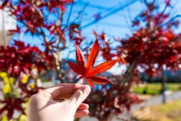 別再傻傻分不清楚! 一次搞懂日本秋天絕景「紅葉」的小知識