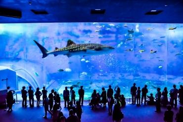 水族館好きの私が選ぶ!ファミリー旅行向け水族館ベスト5