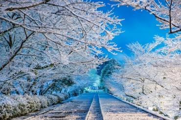 京都的櫻花名所之一,冬季出現美麗夢幻雪景!!