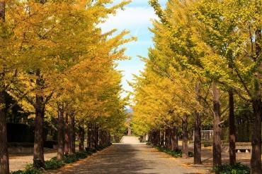 全国イチョウ並木の絶景5選!ロマンチックな黄色の絨毯の上を歩こう